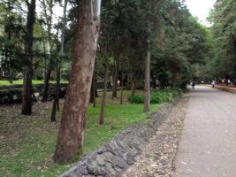 Bosque_de_Tlalpan